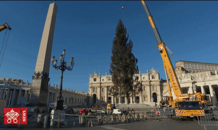 Im Vatikan wurde ein 75 Jahre alter slowenischer Weihnachtsbaum - die Kočevje-Fichte - aufgestellt