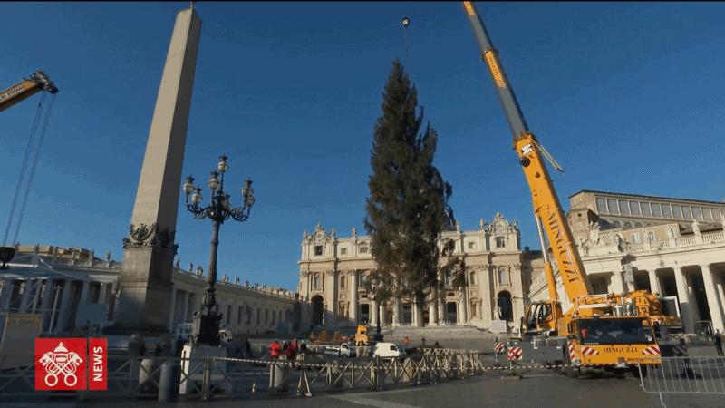 V Vatikanu so postavili slovensko božično drevo – kočevsko smreko, 75-letnica