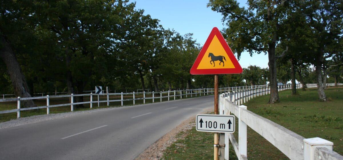19. maj 1580: Lipica in njeni konji